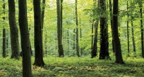 Upotreba sertifikovanog drveta za drvene panele protiv buke